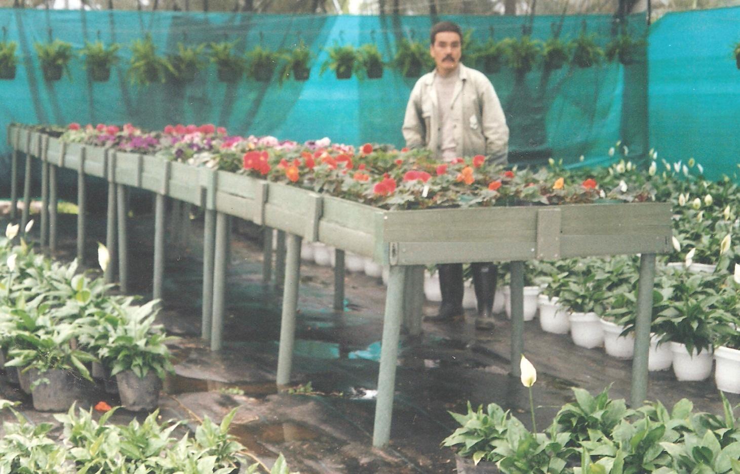 40 cultivos tecnificados invernaderos agricultura cosecha for Estanteria jardin plantas