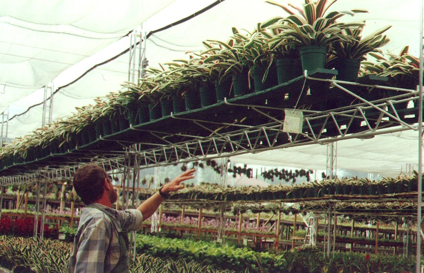 40 cultivos tecnificados invernaderos agricultura cosecha for Herramientas de un vivero