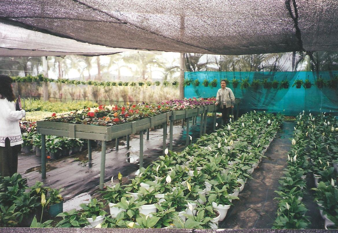 40 Cultivos tecnificados Invernaderos Agricultura Cosecha ...